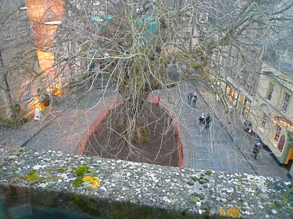 View to the Tree in Winter